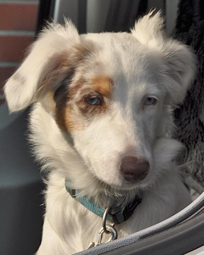 Caro, der Firmenhund
